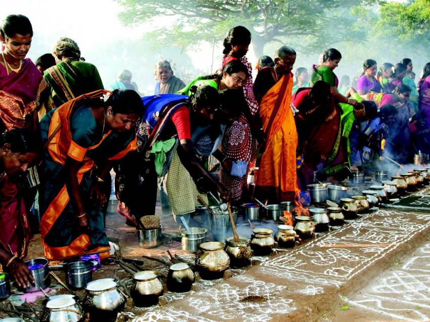What is the significance of the Pongal festival